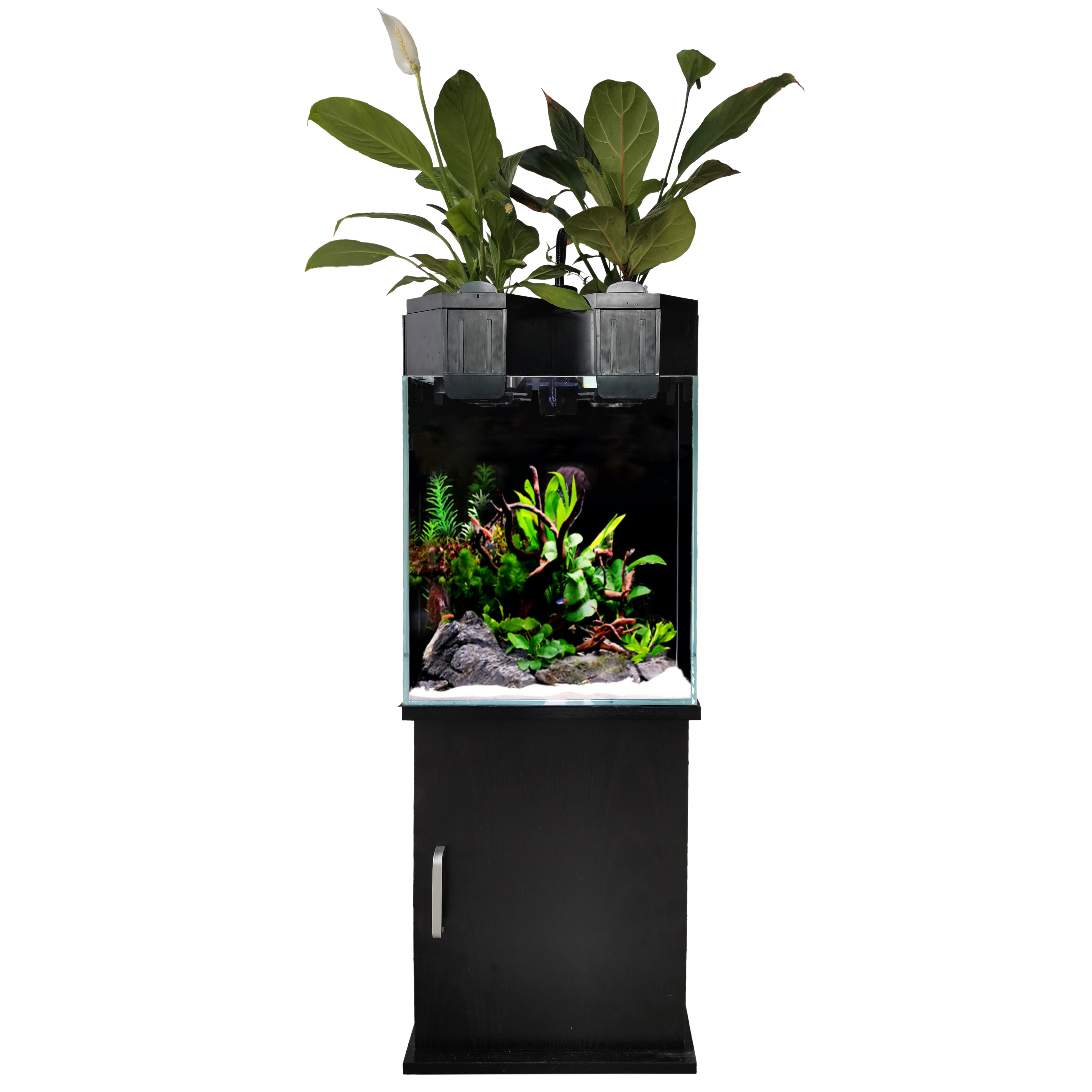 Aquaponic Fish Tank for Home