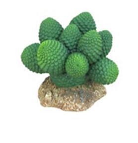 CH-9134 Cactus