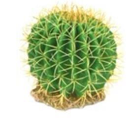 CH-9130 cactus
