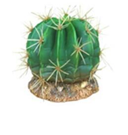 CH-9129 cactus