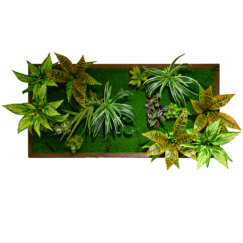 3D Living Plant panel Design series DVE002-PB50100