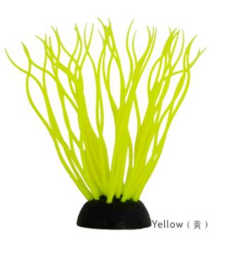 AM211112PT Sea anemones