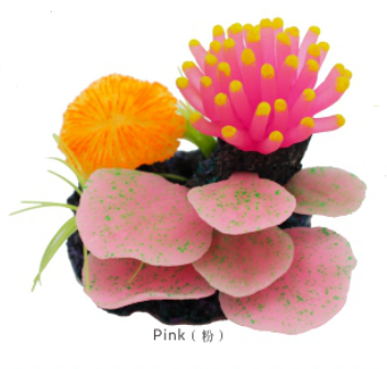 AM311252PB Coral assembiages