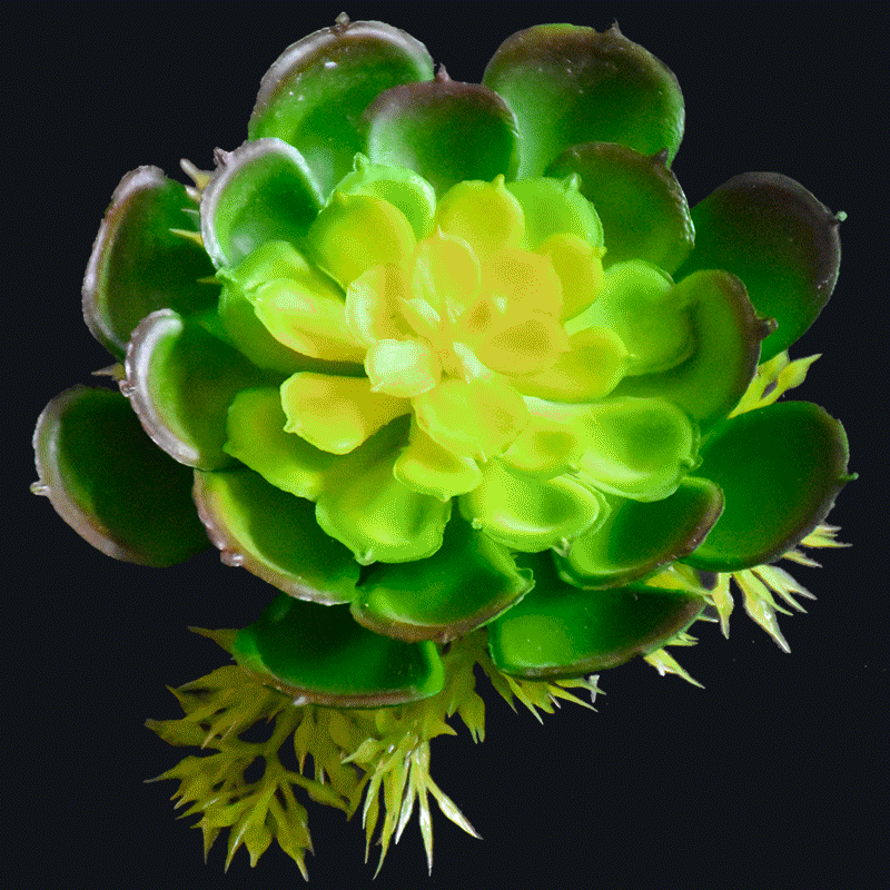 Artificial succulent AS-S040Y