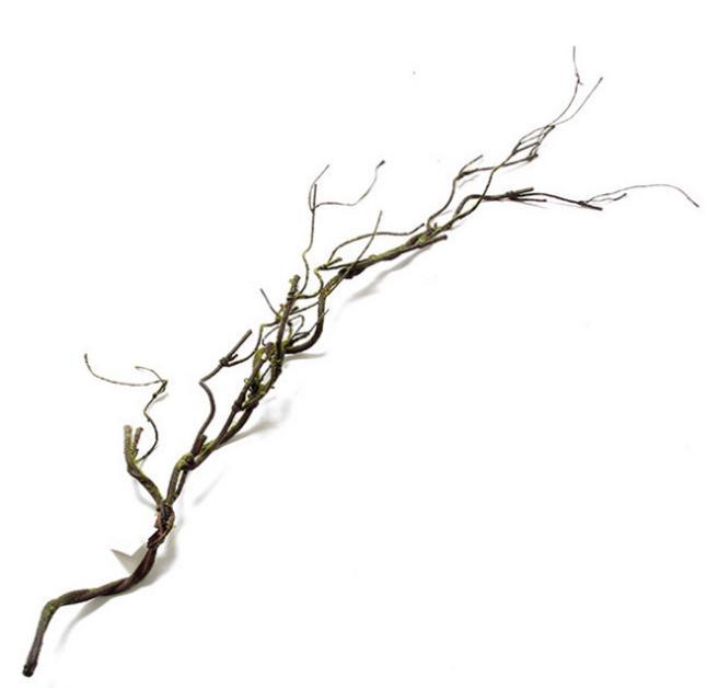 Reptile Vine HY-144