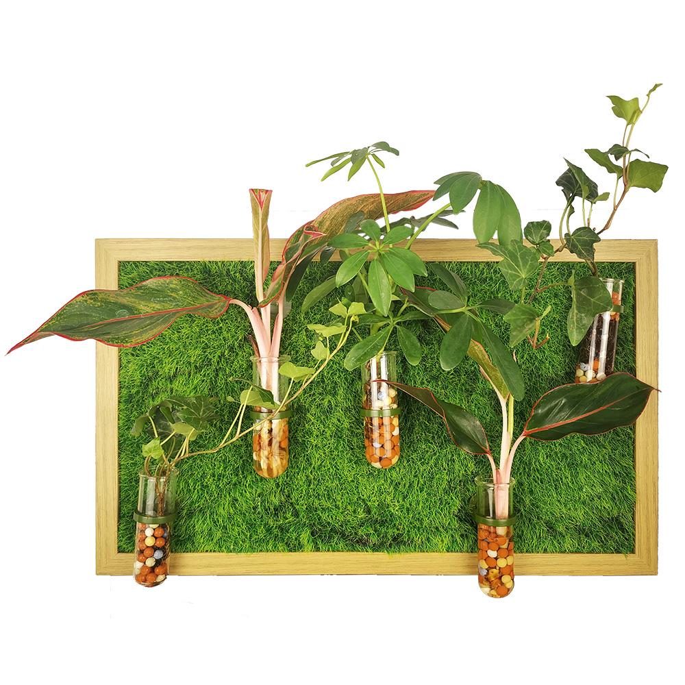 Wall Plant Propagation
