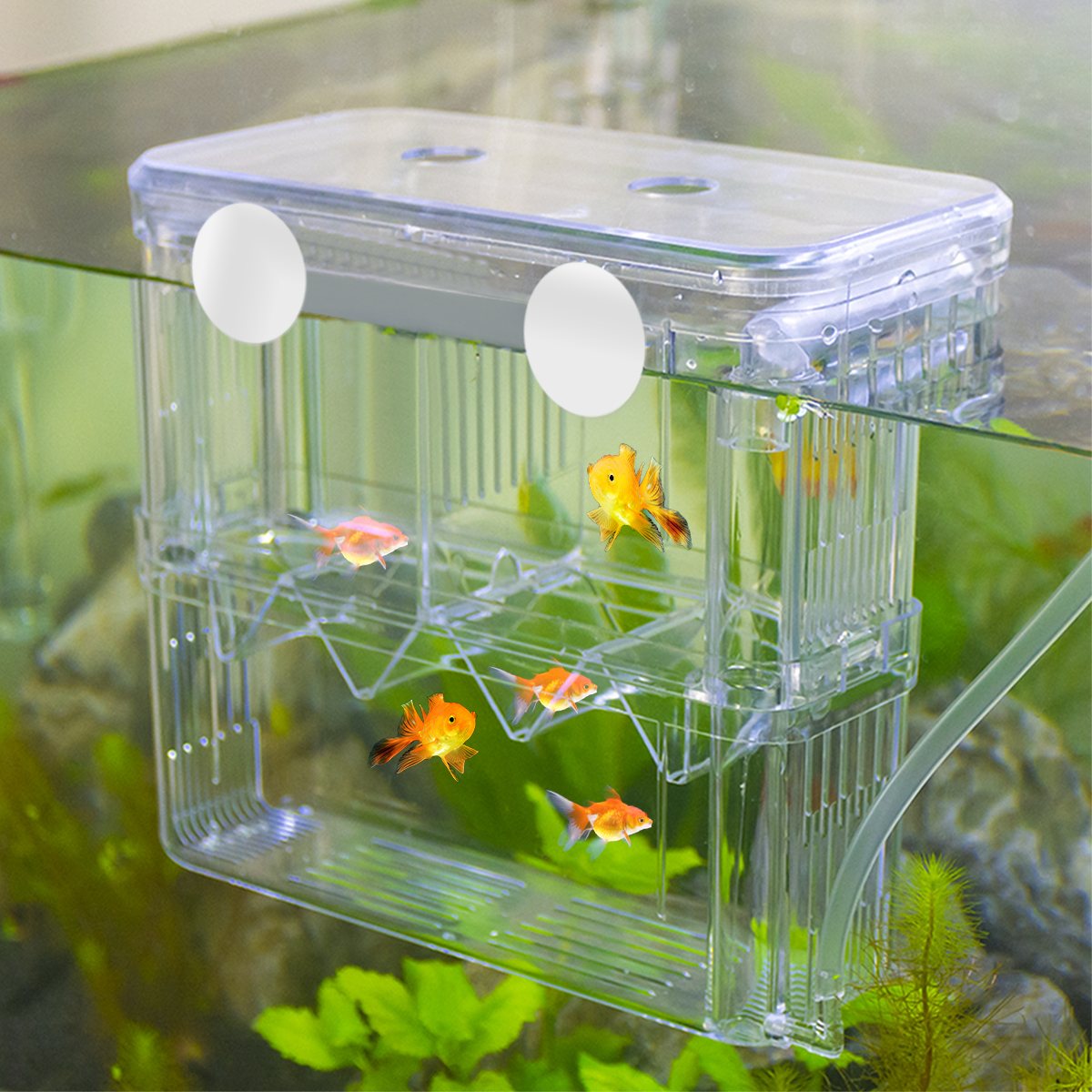 Airlift Aquarium Fish Breeding Box BB-XL